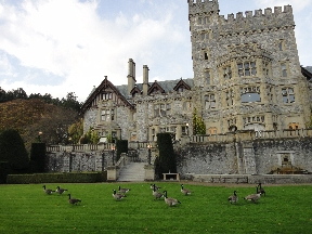 Canadian geese flock at the back of Hatley Castle
