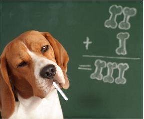Dog doing bone math on a chalkboard