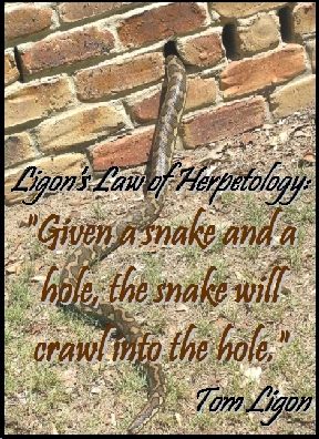 "Ligon's Law of Herpetology: ""Given a snake and a hole, the snake will crawl into the hole.""  #Law #Snake #TomLigon"